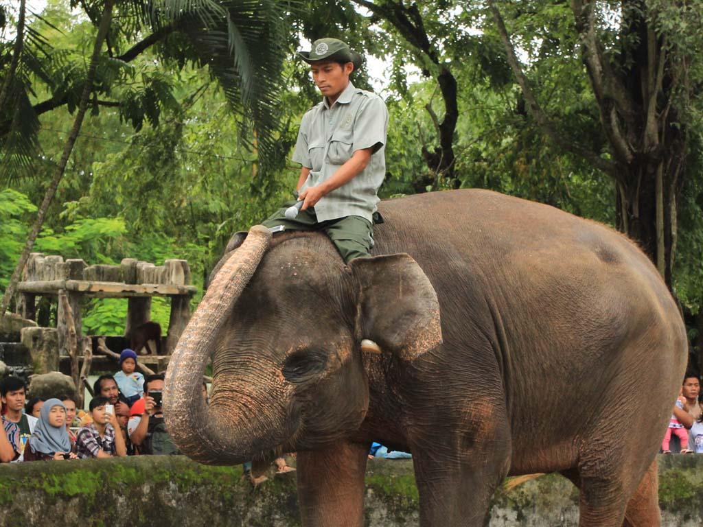 Kebun Binatang Gembiraloka Jogja