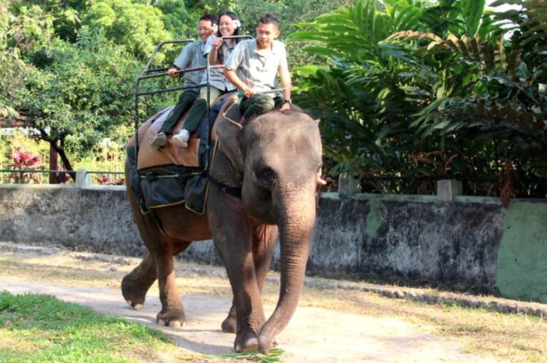 hari-gajah-sedunia